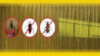 Ưu điểm của màn nhựa PVC ngăn côn trùng